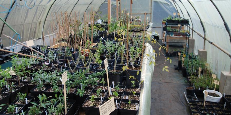 Pépinière Plantes...Etc