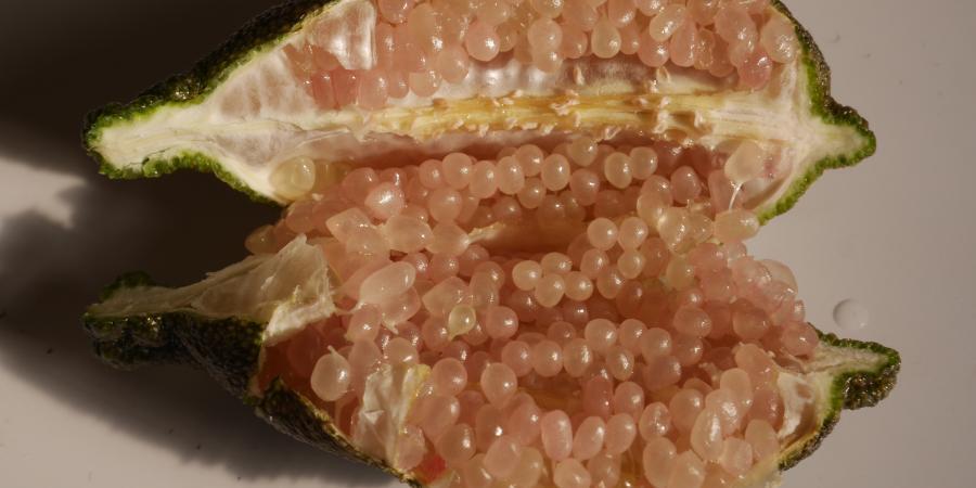 Citrus australasica - Citron caviar - Plantes Etc